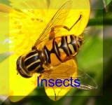 Back To insects