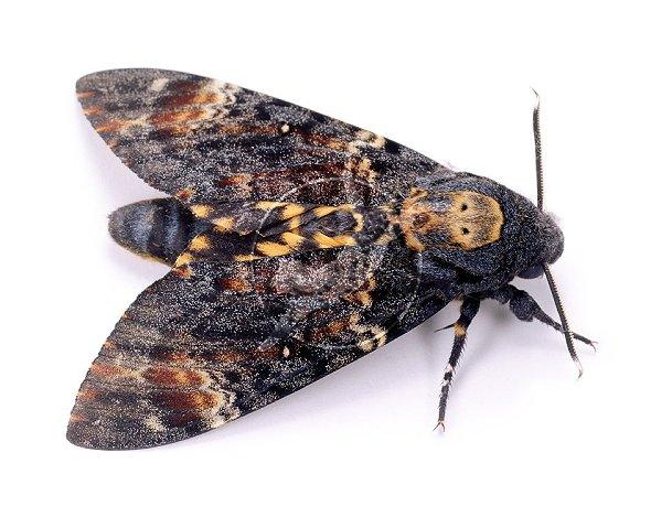 death of a moth annie dillard essay